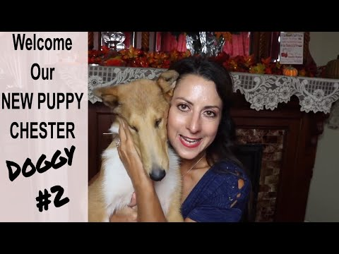 we-got-a-new-puppy-|-welcome-chester-our-newest-edition