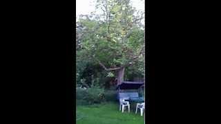 The Garden Owls