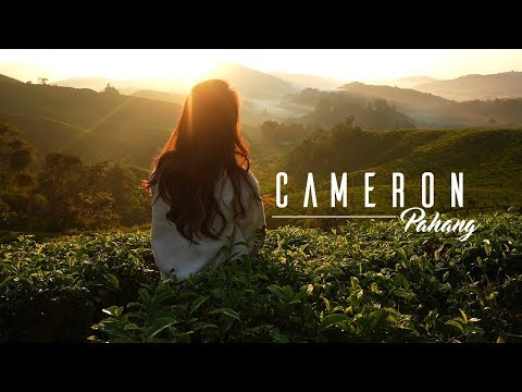 VLog 8 Amazing Tea Field & British Colonial House | Cameron Highland