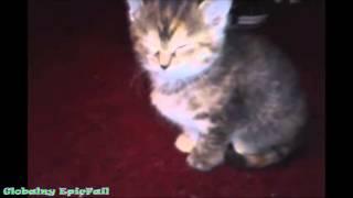 Кота застукали за делом. Забавные котята. Юмор с животными 2014