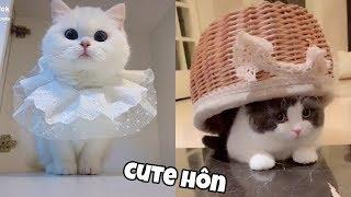 Những chú mèo dễ thương #2 | Boss TikTok