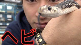 【サプライズ】誕生日にヘビあげてみた thumbnail