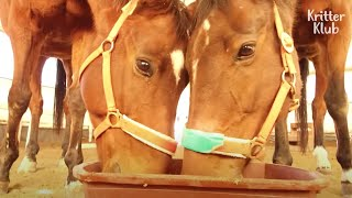 Horse Could Become A Genius Because Of His Sick Girlfriend (Part 2) | Kritter Klub