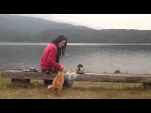 霧島散歩茶器と御池