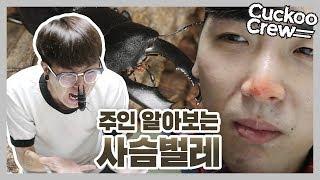 키우는 사슴벌레에게 과연 배신을 당할 것인가? [사슴벌레 코 찝히기] ― 쿠쿠크루(Cuckoo Crew)