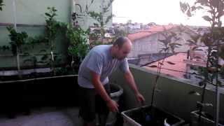 Como adubar plantas frutíferas em vasos