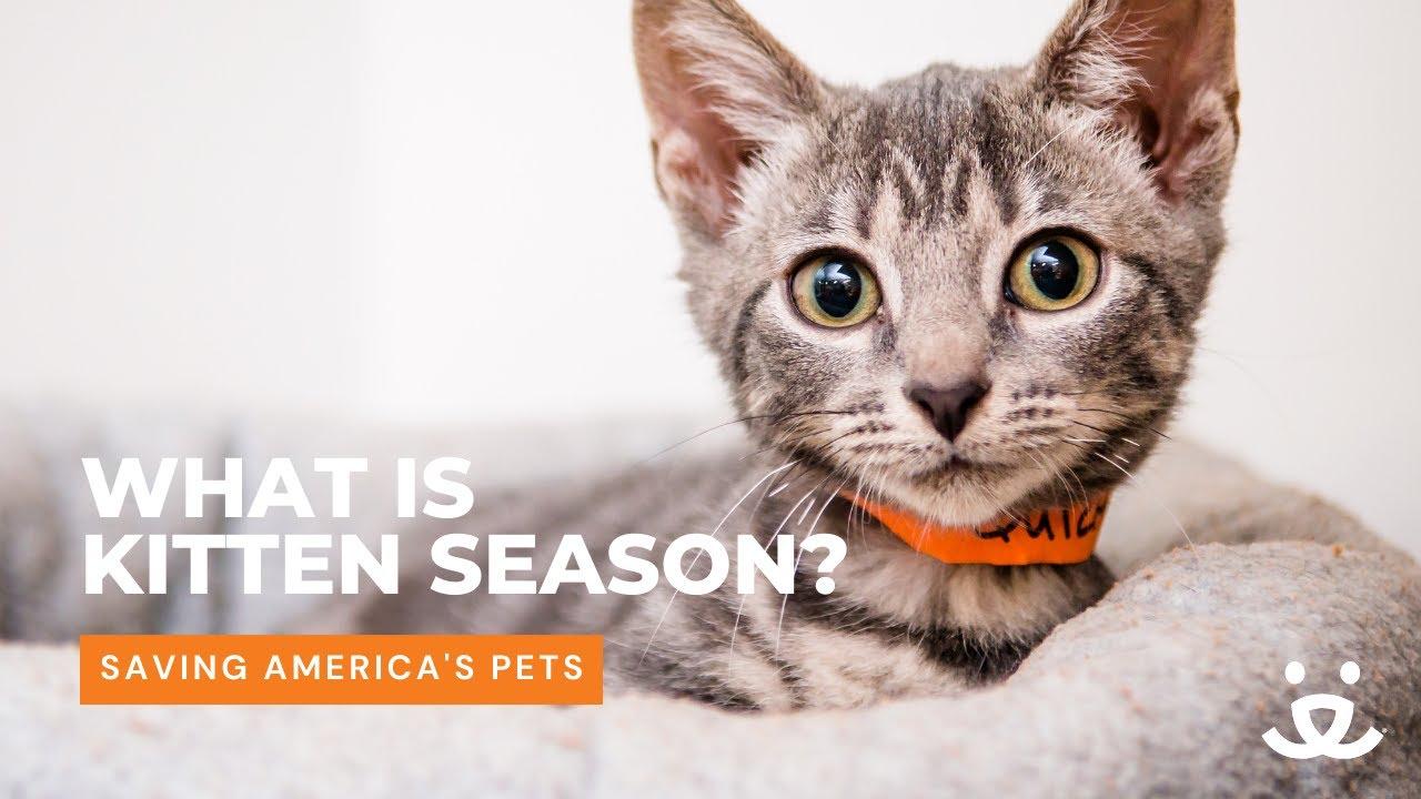 Download Kitten season: when cute and cuddly meets lifesaving