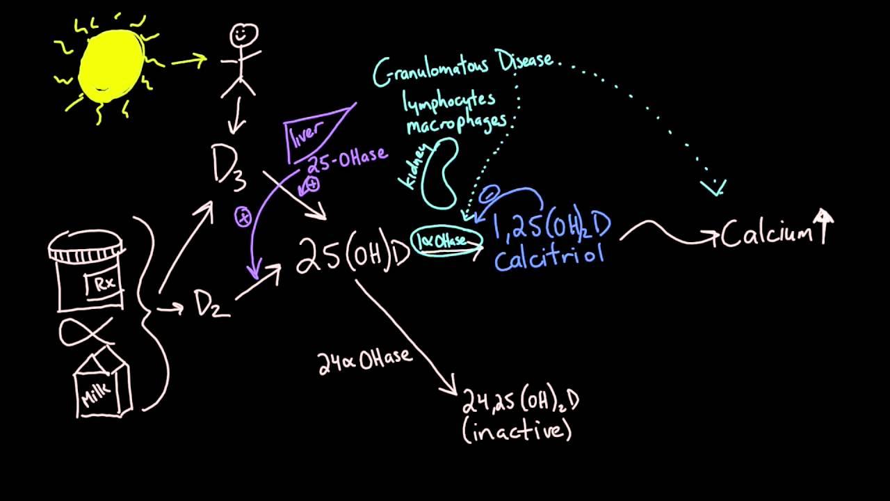Vitamin D metabolism - YouTube