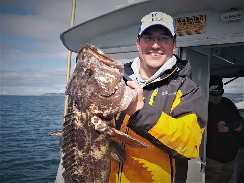 NOAA Lingcod With Seattle Fishing Charters