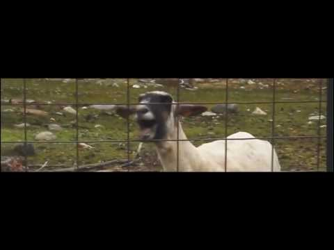 Taylor Swift - I Knew You Were Trouble Goat Edition [HD]