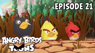 Angry Birds Toons | Eating Out - S2 Ep21