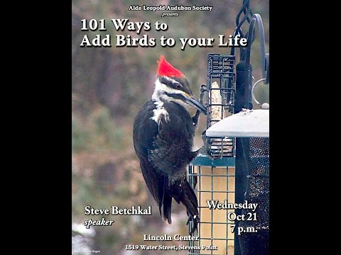101 or so Ways to Add More Birds to Your Life