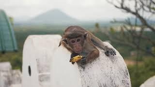 Sri Lanka 2019 Travel Video
