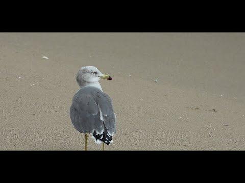 [4K/RX10M3] Walk along the Beach @Pusan, Korea 16th Oct 2017