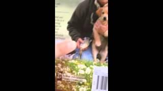 Labrador Retriever Training Hunting Resources