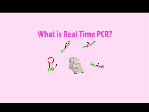 Real Time PCR - Basic simple animation - part 1 intro HD