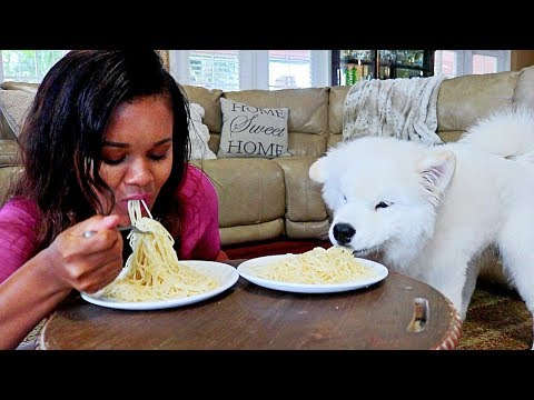 Spaghetti Eating Competition With My Dog - Samoyed Dog Vs Me