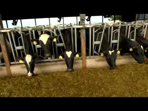 Dairy Farming Documentary
