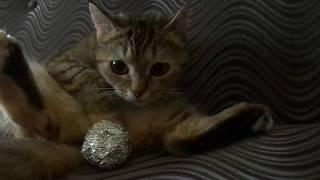 Кошка Ромашка- хозяйка дивана!))