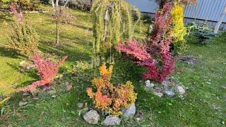 Моя любимая дача 12 октября 2021. Собрала листву. Подготавливаю садик зиме.❤️
