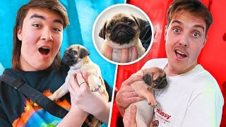 SURPRISING LAZARBEAM OFFICE WITH CUTE PUPPY