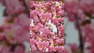 видео Сценарий юбилея 60 лет женщине (ведущая – дочь)
