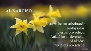 01 | Deklamado de Hejna – Al Narciso | 수선화에게 – 에스페란토