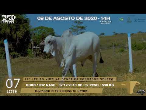 LOTE 07 CORD 1032