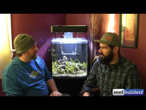 Talking With Matt Pedersen About Clownfish & Captive Breeding