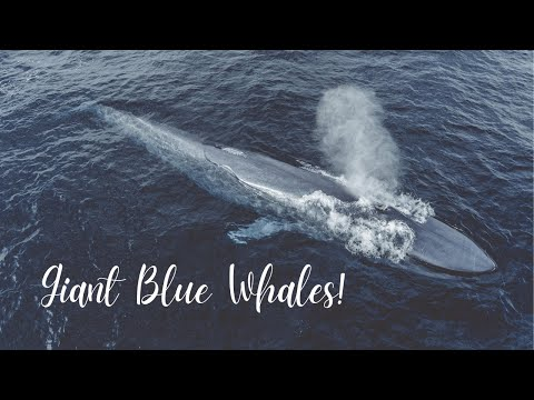 Whale Watching Cruise - Video