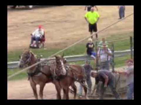 Home Videos: Horse Pull at Athens Fair Ground 2015