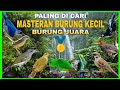 Masteran Suara Prenjak Pleci Ciblek Burung Kecil Suara Pedas Roll Tembak Top Paling Dicari Juri  Mp3 - Mp4 Download