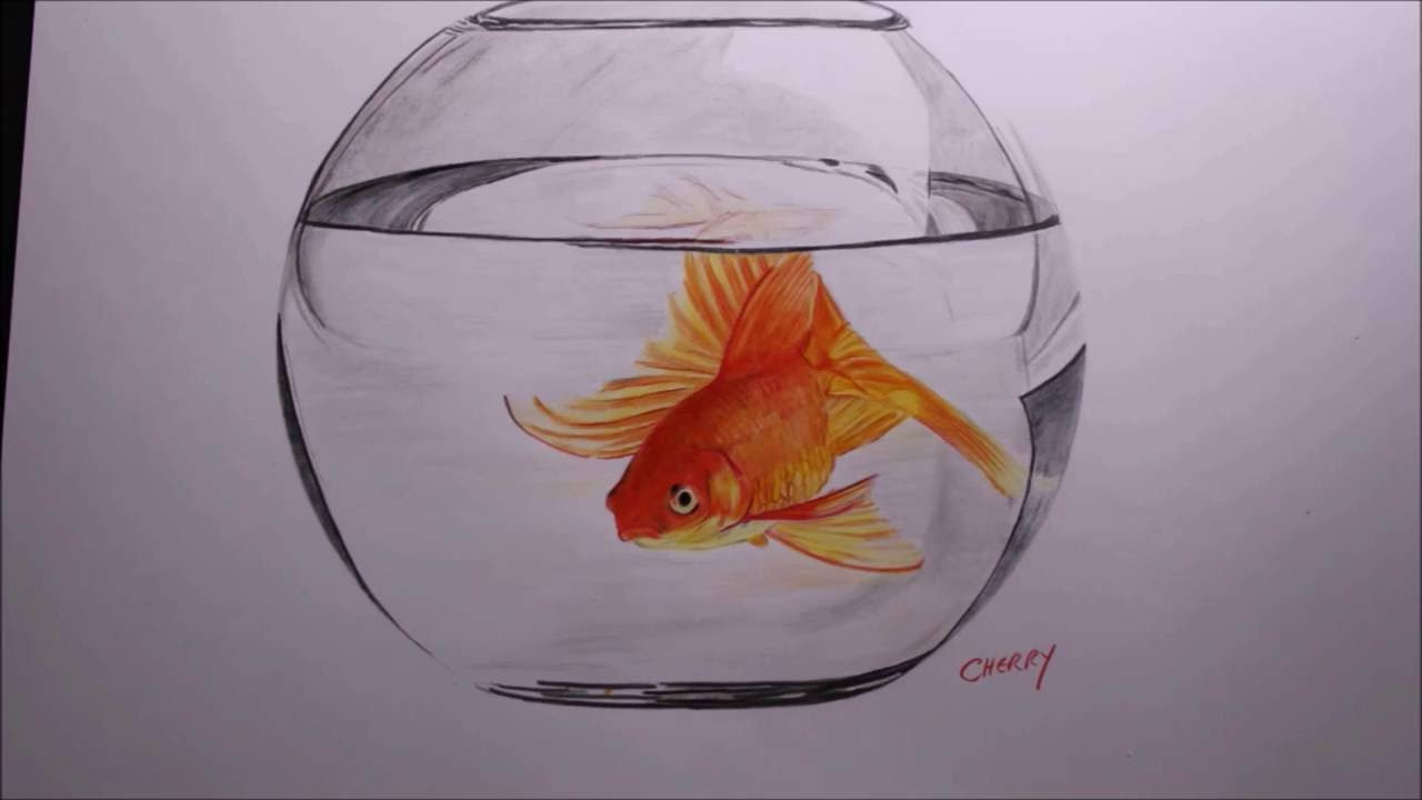Goldfish in a bowl pencil drawing time lapse  YouTube