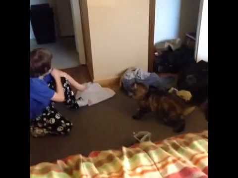 Kid gets mauled by cat
