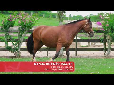 Lote 18 - RTMN Buenissima