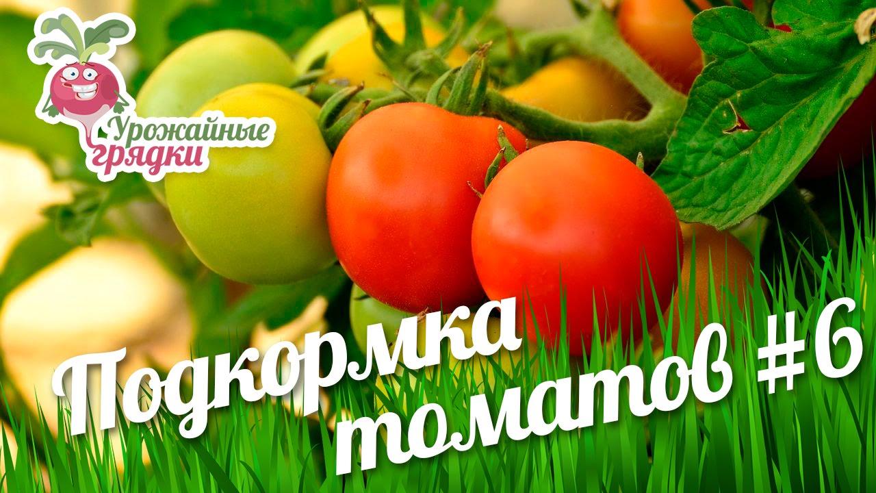 Чем подкормить помидоры на цвету в теплице
