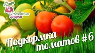 Помидоры в теплице. Подкормка томатов. Эксперимент часть 6(Для того, чтобы сберечь помидоры от солнечных ожогов и стерилизации цветов, использовал укрывной материал...., 2016-06-28T12:00:00.000Z)