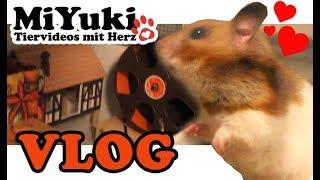 Basteln für Hamster ♥ Einrichtung selber bauen ♥ DIY Nagerzubehör ♥ Miyukis♥Vlog