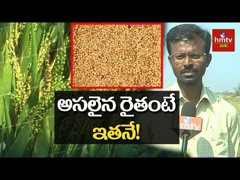Foxtail Millet(అండు కొర్రలు) Cultivation | Young Farmer Kishore Chandra Success Story | hmtv Agri