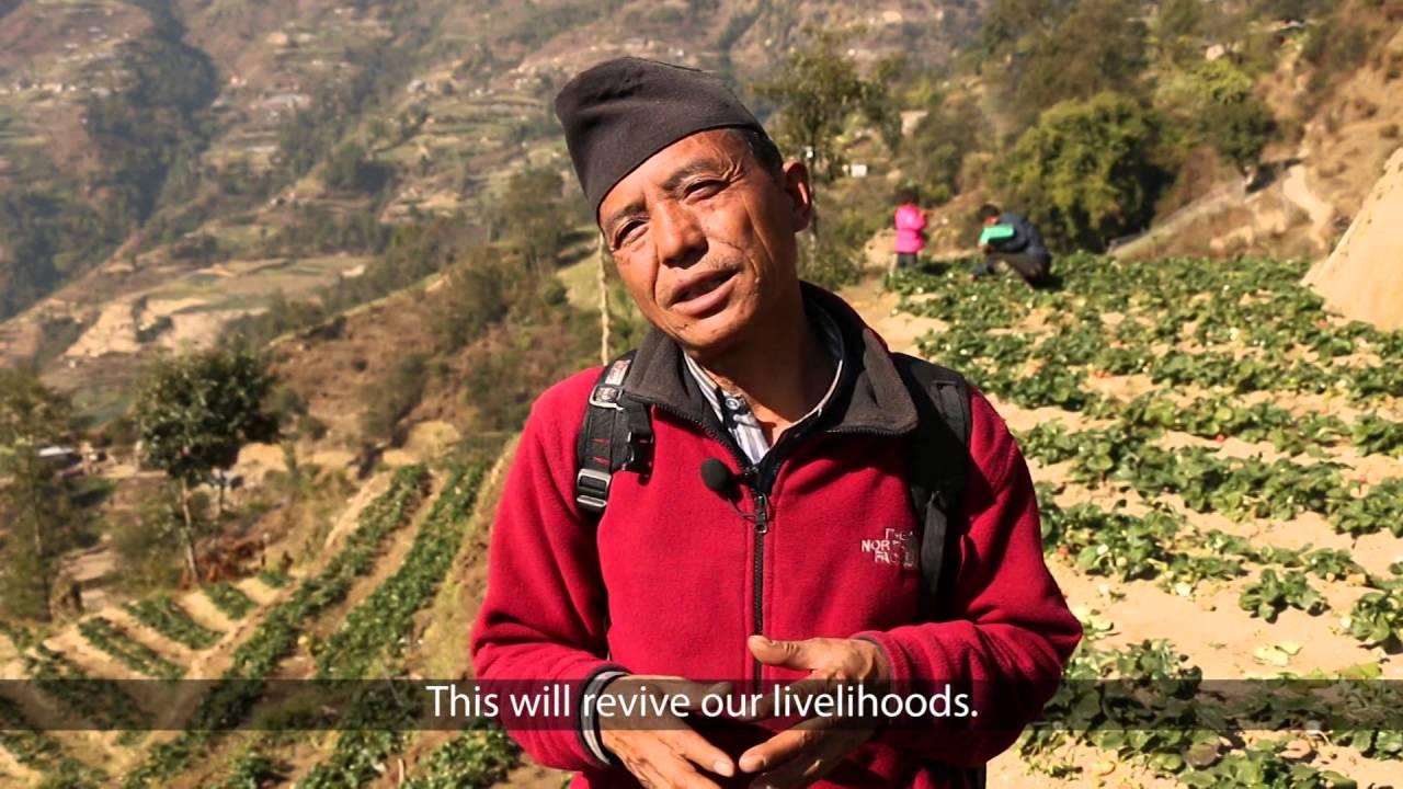 Back on the Farm: Strawberry entrepreneurs in Nepal