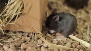 Все О Домашних Животных: Маленькие Хомяки-Джунгарики