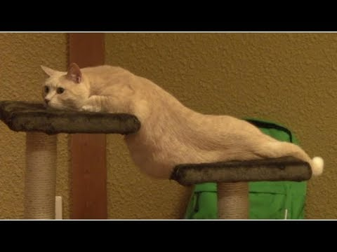OVERLOAD of FUN and LAUGHTER! - Funny CAT compilation