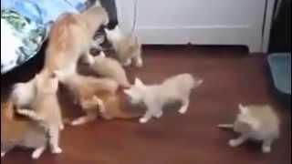 Sakar Anne Kedi Yavrularını Çok Fena Korkuttu
