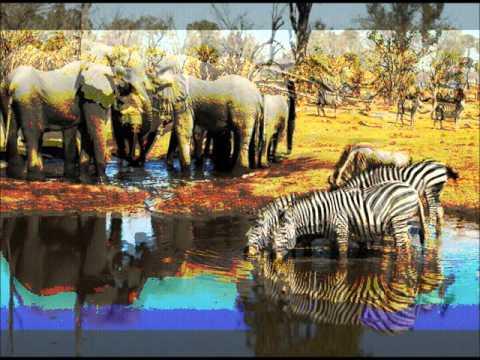 Safari por Botswana  Curiosities of the world ... Safari Botswana