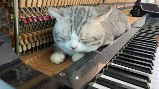 Cat piano - foot massage machine for meow