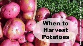 When to Harvest Potatoes Thumbnail