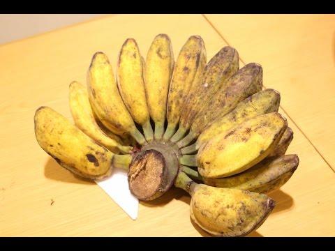 Agri TV # กล้วยหิน พืชเศรษฐกิจ จังหวัดยะลา ในงานของดีจากชายแดนใต้