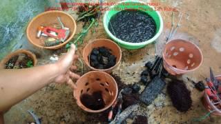 Cách trồng phong lan giã hạc vào chậu sa ! giã hạc di linh xuân