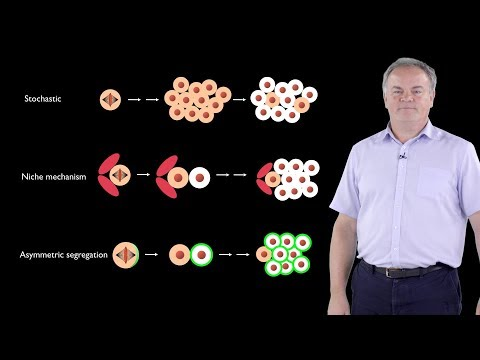 Jurgen Knoblich (IMBA) 1: Asymmetric Cell Division; From Drosophila To Humans