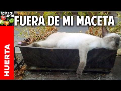 Repelentes para perros y gatos compo jardiner a doovi for Ahuyentar gatos jardin